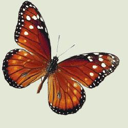 Poezii pentru copii - Ghicitoare despre fluturi